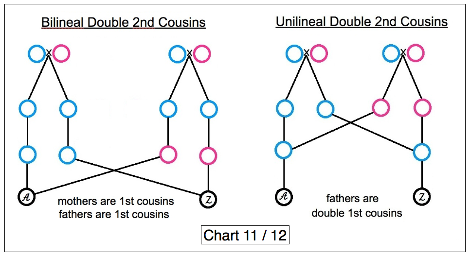 Related not are when cousins kinship terms